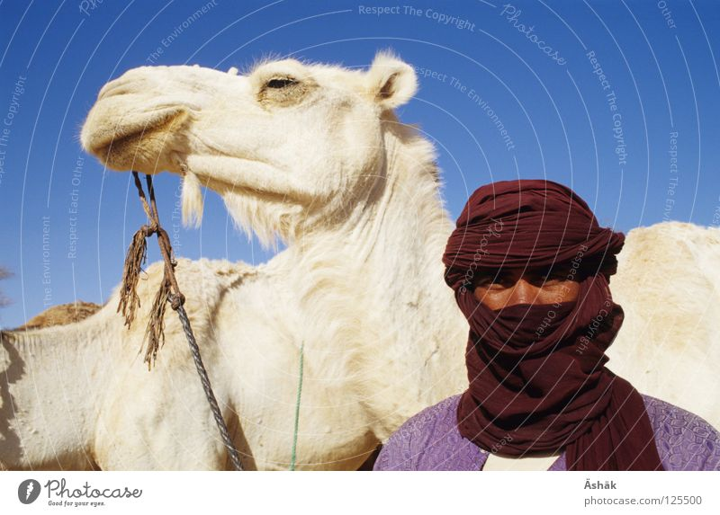 Man White Africa Desert Human being Animal Pride Camel Sahara Turban Nomade Niger