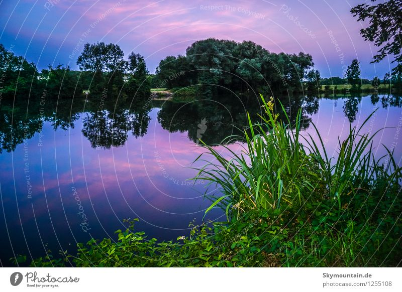 Nature Blue Plant Green Summer Water Flower Landscape Forest Environment Warmth Meadow Grass Lake Pink Weather