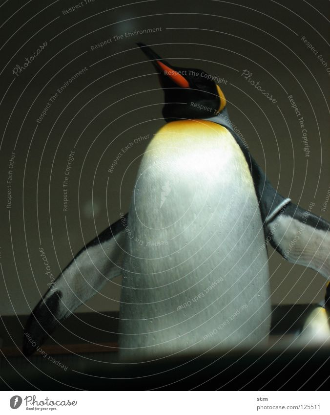 ... momentary Penguin King penguin Zoo Playing Animal Come Approach Inject Berlin zoo Dignity Multicoloured Joy Antarctica Beautiful Water Arm Water wings