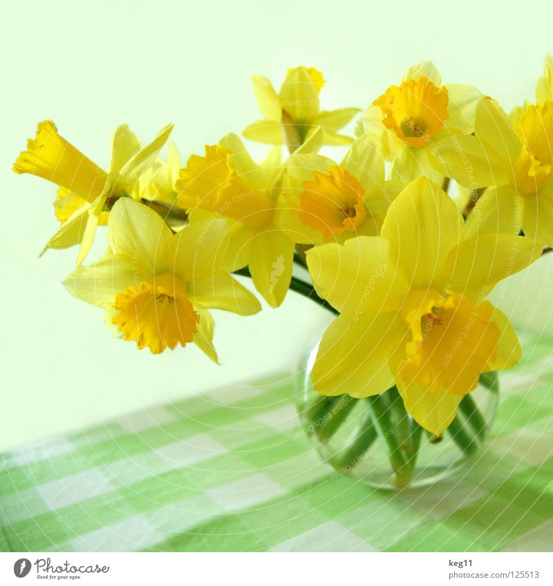 Plant Flower Spring Feasts & Celebrations Table Stalk Bouquet Egg Blanket Tulip Daisy Vase Easter egg Bell Narcissus Hyacinthus