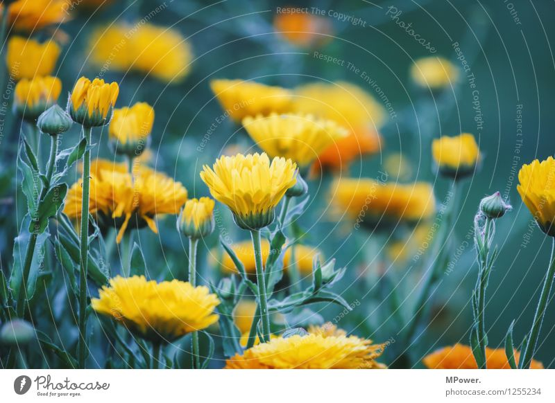 Nature Plant Flower Leaf Animal Environment Yellow Blossom Meadow Grass Garden Bright Park Bushes Crazy Blossoming