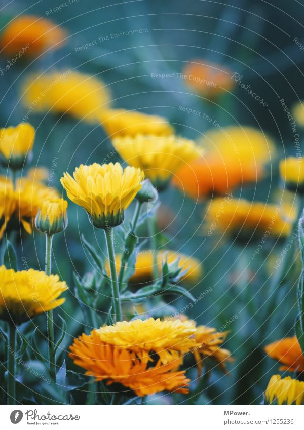 flowerpower Environment Nature Plant Animal Beautiful weather Flower Grass Bushes Leaf Blossom Wild plant Garden Park Meadow Bright Crazy Yellow Blossoming Bud