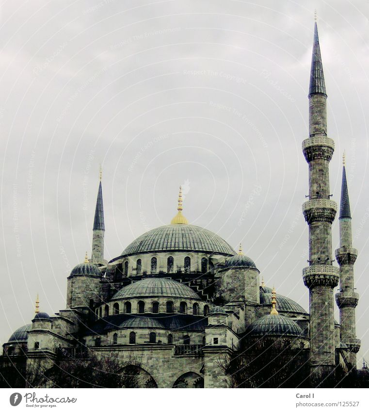 mightily Mosque Prayer Allah Deities Belief Vacation & Travel Art Istanbul Turkey Religion and faith Carpet Minaret Domed roof House of worship Moslem Tradition
