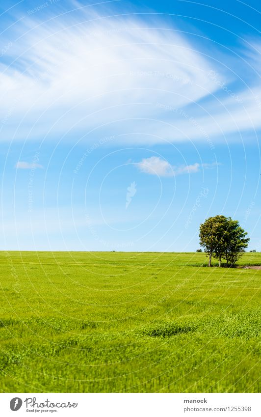 wide field Nature Landscape Clouds Summer Beautiful weather Warmth Tree Field Free Infinity Clean Blue Green Freedom Denmark Jutland Wheat Horizon Reduced