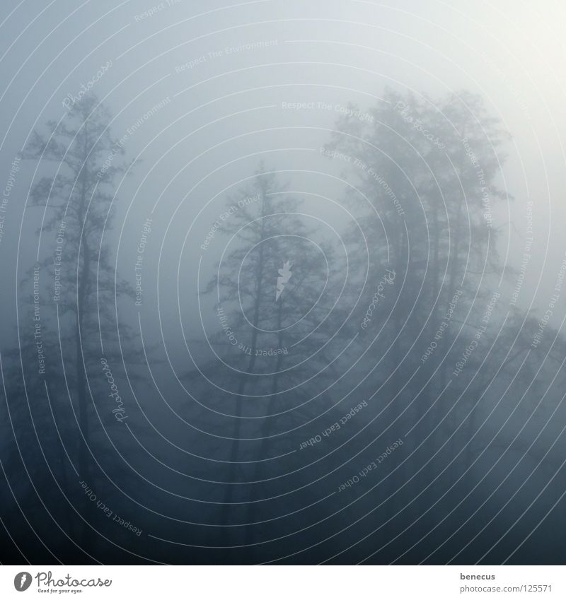 no transparency Fog Vail Morning Dreary Bad weather Tree Silhouette Dark Forest Lighting Hope Gray Ambiguous Unclear Blur Easy Diffuse Hazy Sky foggy befog