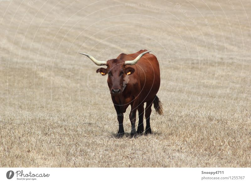 Nature Calm Animal Environment Warmth Meadow Brown Power Esthetic Climate Threat Beautiful weather Dry Serene Cow Patient