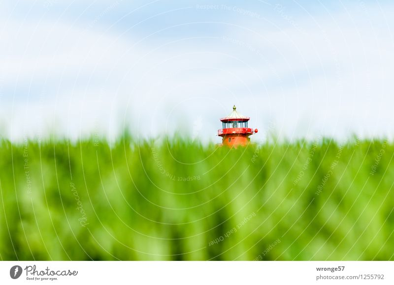 inshore mushroom Landscape Sky Horizon Summer Agricultural crop Grain field Field Germany Mecklenburg-Western Pomerania Europe Tower Lighthouse Roof