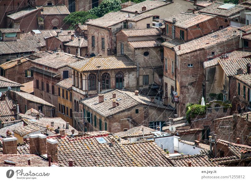 confusing Vacation & Travel Adventure Sightseeing City trip Summer vacation Living or residing Siena Tuscany Italy Town Downtown Old town