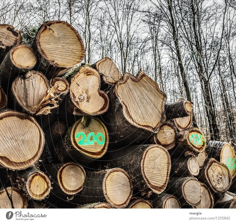 200...made it this far! Craftsperson Lumberjack Forester Lumber industry Renewable energy Forestry Agriculture Industry Trade Craft (trade) Environment Nature