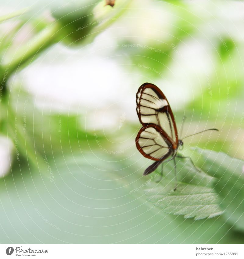 even the smallest... Nature Plant Animal Spring Summer Tree Leaf Garden Park Meadow Wild animal Butterfly Wing glass wing butterfly 1 Relaxation Flying Sit