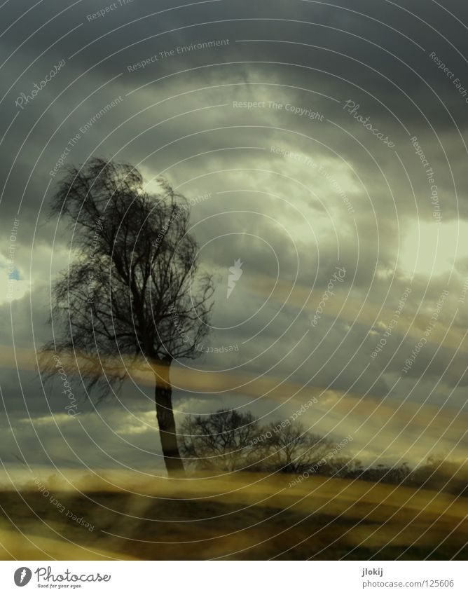 Weather, weather, weather... Gale Tree Plant Growth Grass Straw Field Wet Clouds Storm Sky Area Worm's-eye view Horizon Rural Emma Wind Nature Branch Twig