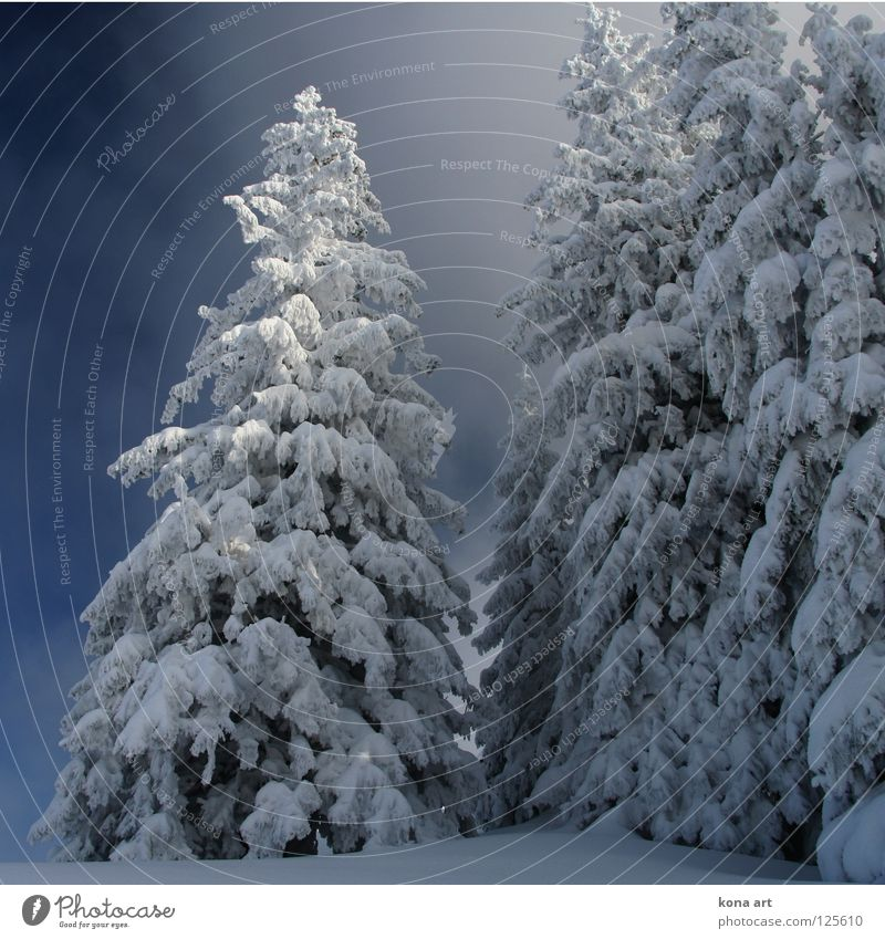 Deep frozen Winter Dress Forest Tree Cold Clink White Ice Snow winter dress Sky Frost land Branch Twig Blue Alps