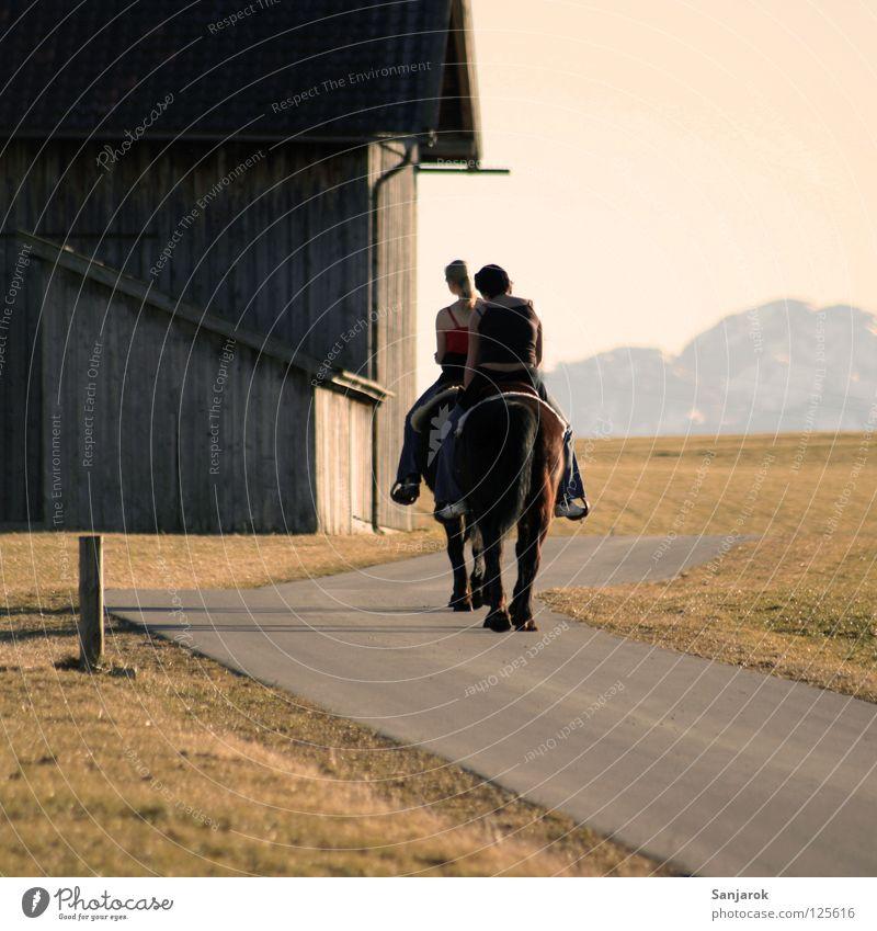 Lucky Luke & Friend Horse Sunset Heavy horse Hoof Barn Light Leisure and hobbies Grass Grassland Physics Tar Tails Pet Farm animal Rain gutter Ride Horse's gait