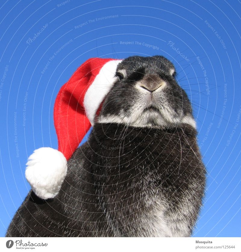 Animal Christmas & Advent Sky White Blue Red Black Rodent Cold Feasts & Celebrations Easter Santa Claus Carnival Cap Evil