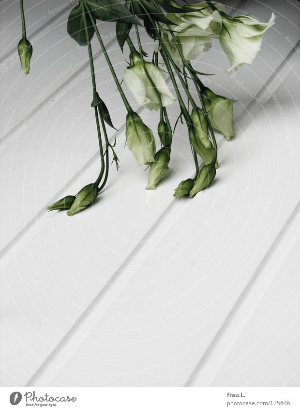 Buckled Flower Bouquet White Green Summer Lisianthus Delicate Wood Wooden board Broken Cold Hang Supercooled Funeral Grief Decoration Distress Lie Pallid