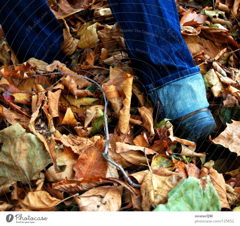 discovery. Autumn Leaf Footwear Discover Pants Rustling To go for a walk Going Cloth Moody Lanes & trails Hiking Deep Under Flat Woodground Research Go under
