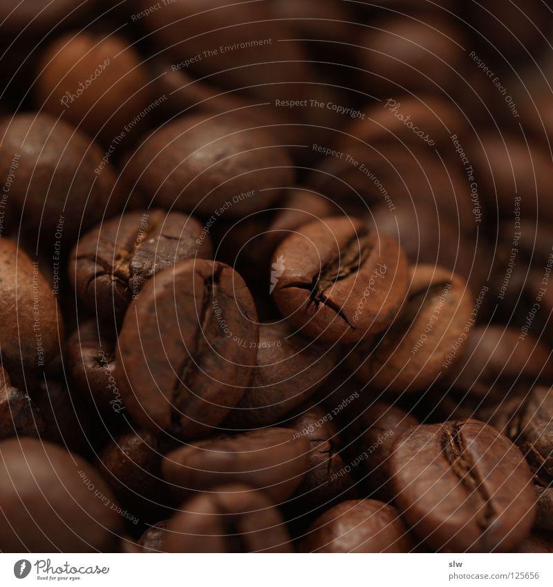 Stone Coffee To enjoy Brazil Plant Coffee bean Caffeine