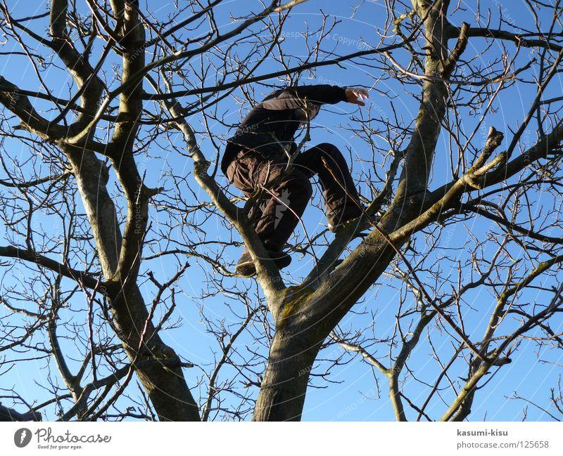 Man Sky Tree Joy Winter Crazy Dangerous Threat Leisure and hobbies Climbing Branch