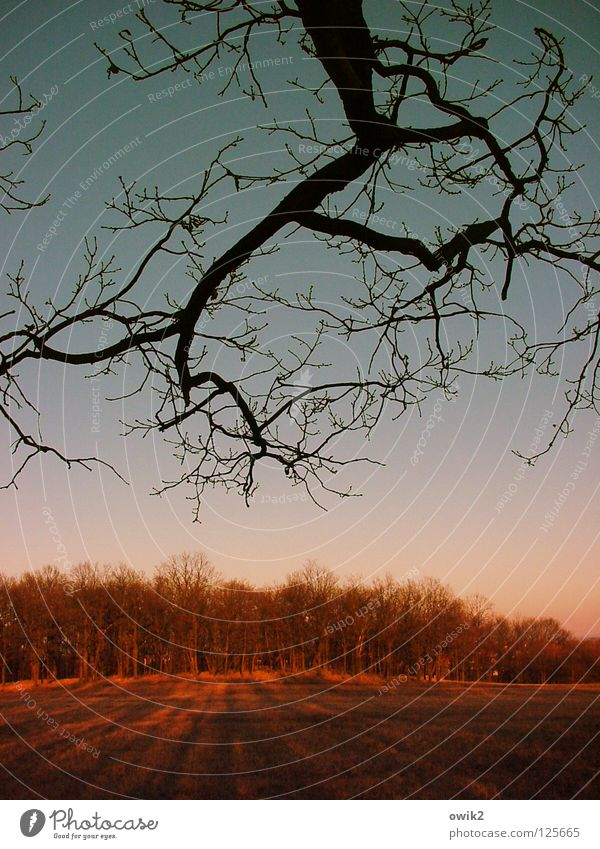 danger of collusions Forest Tree Horizon Dusk Nature Twig Branch Silhouette To go for a walk somewhere Exterior shot