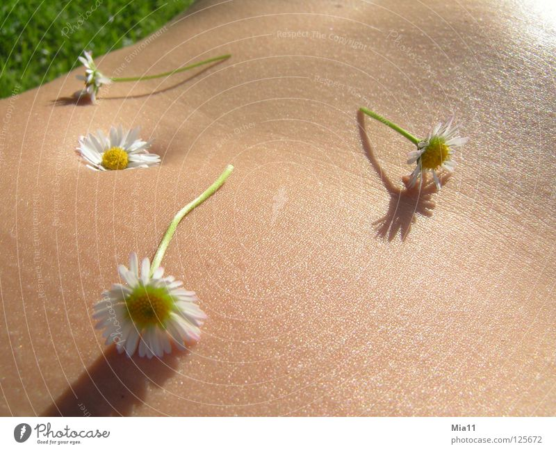 flower belly Daisy Beautiful Summer Relaxation Calm Exterior shot Woman Joy Macro (Extreme close-up) Close-up Stomach