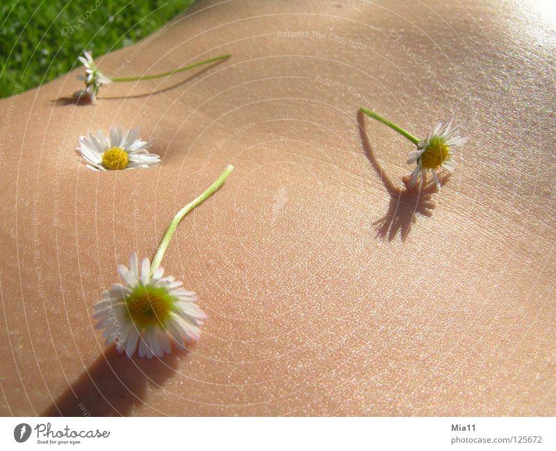 Woman Beautiful Summer Joy Calm Relaxation Stomach Daisy Meadow flower