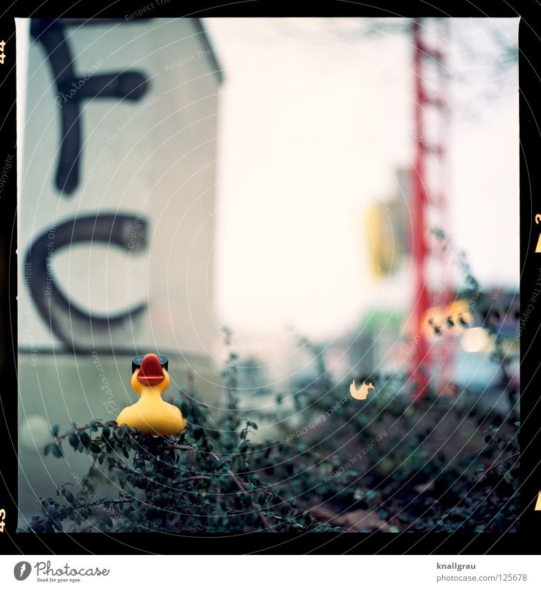 FC duck Squeak duck Letters (alphabet) Deutsche Telekom Garden Bed (Horticulture) Yellow Toys Medium format Hannover City life Exuberance Good mood Joy Duck
