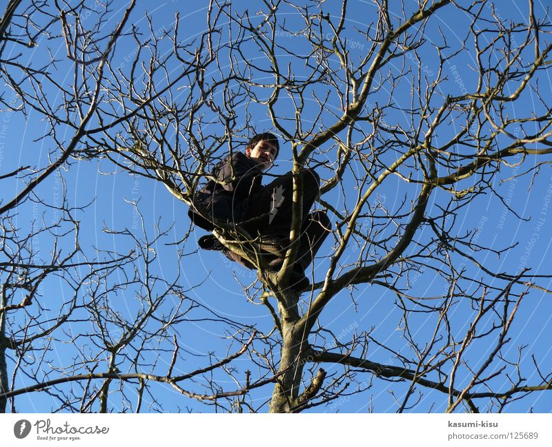 Man Sky Tree Joy Winter Crazy Dangerous Leisure and hobbies Branch