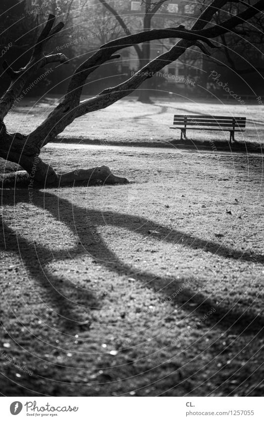 zoopark Environment Nature Landscape Sunlight Autumn Beautiful weather Tree Park Meadow Bench Calm Loneliness Black & white photo Exterior shot Deserted Day