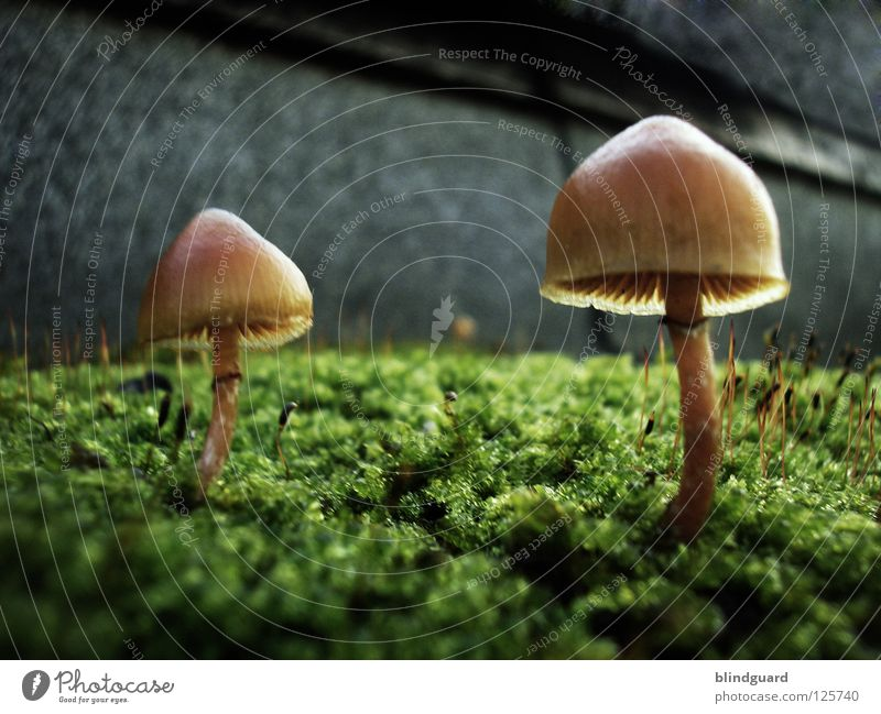 Nature Green Plant Yellow Life Autumn Wall (building) Wall (barrier) Park Small Environment Growth Blossoming Universe Sunshade Mushroom