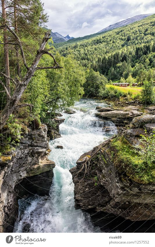 waterfall Relaxation Vacation & Travel Mountain Nature Landscape Water Clouds Tree Rock Brook River Waterfall Idyll Tourism Norway Møre og Romsdal destination