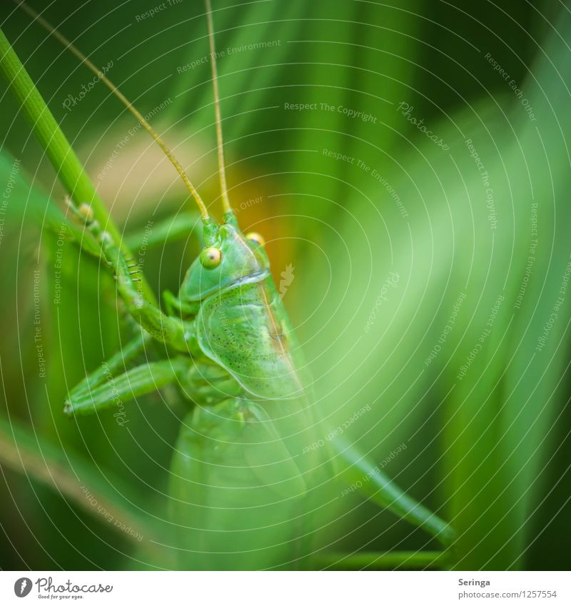 Ascent of a grasshopper Plant Animal Beetle Animal face 1 Hang Crawl Jump Dryland grasshopper Insect Colour photo Multicoloured Exterior shot Close-up Detail