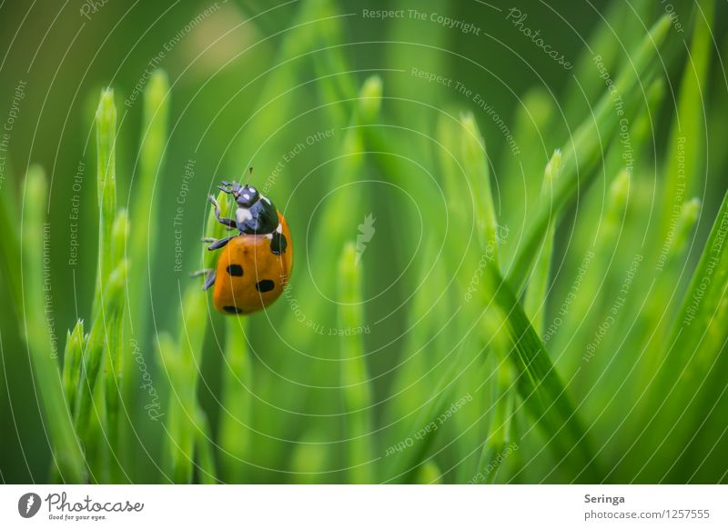 Arrived at the top Plant Animal Beetle Animal face 1 Flying To feed Crawl Ladybird Insect Colour photo Multicoloured Exterior shot Close-up Detail
