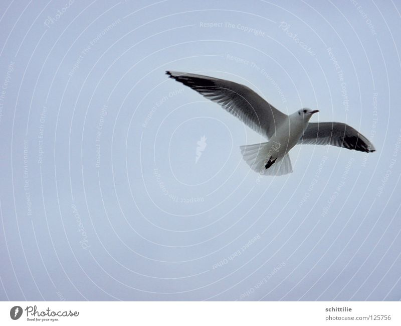 comes a bird flown ... Bird Ocean White Swing seagull Sky Flying Aviation Freedom Blue Wing
