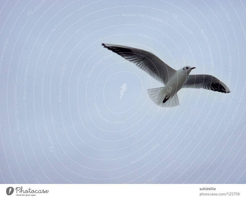 Sky White Ocean Blue Freedom Bird Flying Aviation Wing Swing