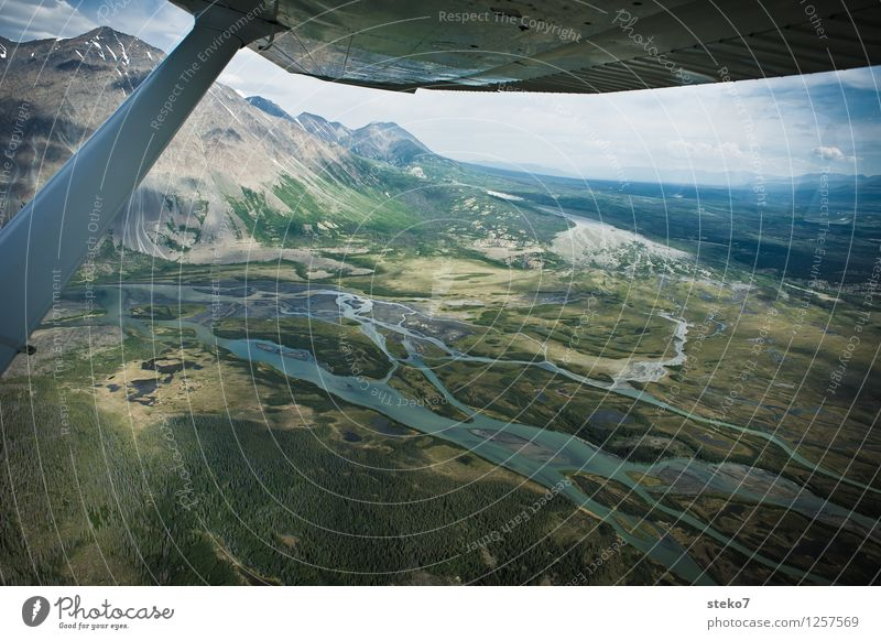 bear country Forest Mountain River bank Bog Marsh Flying Adventure Discover Far-off places Tundra Yukon Territory Wing tip Light aircraft Aerial photograph