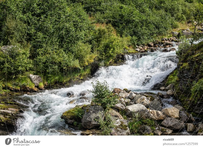A river in Geiranger Relaxation Vacation & Travel Mountain Nature Landscape Water Tree Forest Brook River Idyll Geirangerfjord Norway Møre og Romsdal