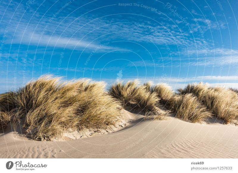 Dune at the Baltic Sea Relaxation Vacation & Travel Beach Ocean Nature Landscape Sand Clouds Wind Gale Coast Tourism Marram grass Warnemünde Rostock