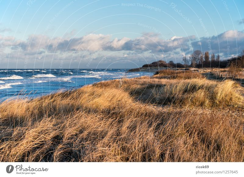 View of the Baltic Sea coast Relaxation Vacation & Travel Beach Ocean Waves Nature Landscape Water Gale Coast Wood Romance Idyll groynes Dune Marram grass