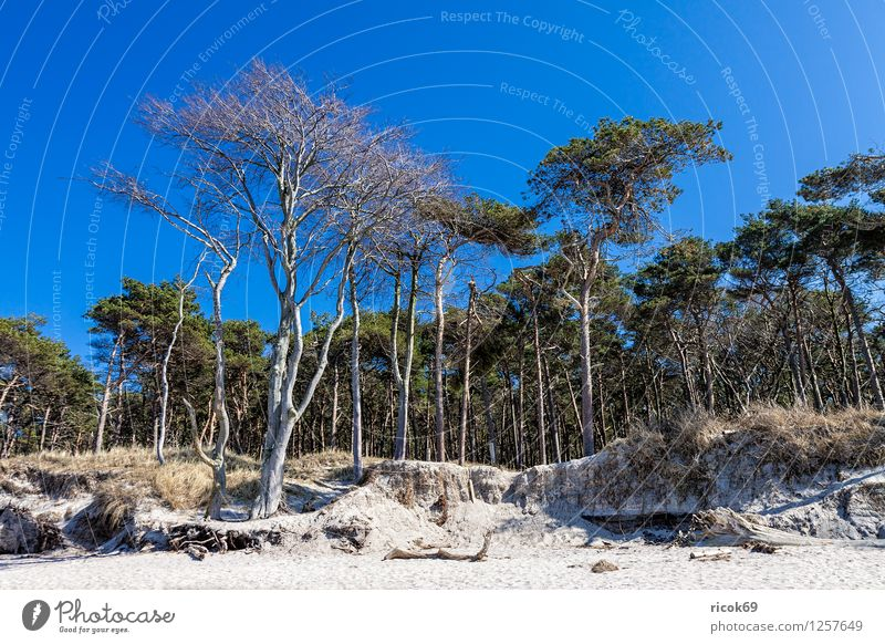 Coastal forest at the Baltic Sea Relaxation Vacation & Travel Beach Ocean Nature Landscape Sand Clouds Tree Forest Wood Blue Romance Idyll Western Beach