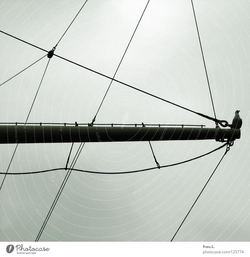 Sky Bird Historic Harbour Navigation Seagull Electricity pylon Elbe Sailing ship Colorless Rigging Port of Hamburg