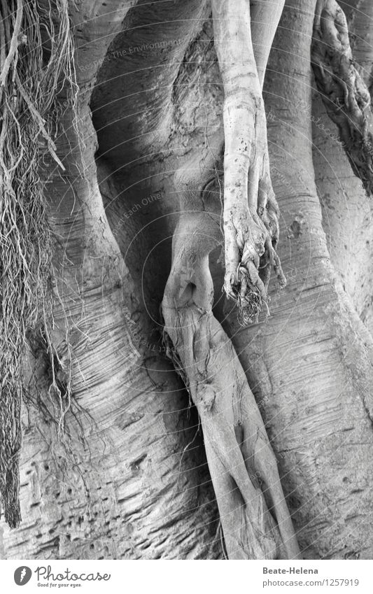 Nature Plant Female nude Tree Eroticism Wood Park Hair Body Esthetic Fantastic Joie de vivre (Vitality) Round Change Tree trunk Exotic