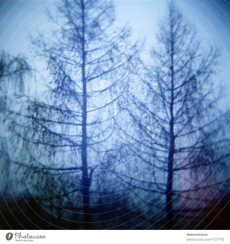 Ghost Spruces. Tree Eerie Analog Coniferous trees Diana ghost spruce Spooky Lomography Vignetting Silhouette