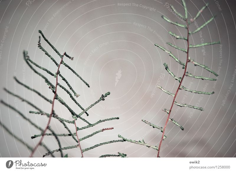 Sky Plant Clouds Movement Simple Twig Thin Firm Stalk Ornamental plant