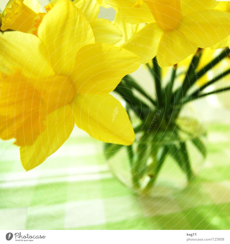 Plant Flower Yellow Spring Feasts & Celebrations Table Stalk Bouquet Egg Blanket Tulip Daisy Vase Easter egg Bell Narcissus