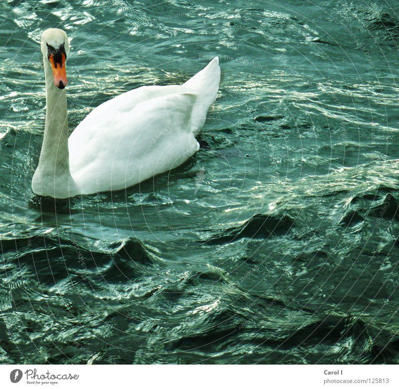 Blue Water White Animal Dark Life Lake Bird Waves Wind Swimming & Bathing Drops of water Dangerous Railroad Wing Threat