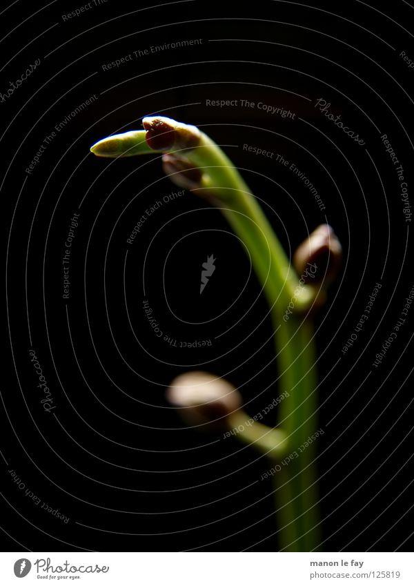 Nature Beautiful Flower Green Plant Black Life Blossom Lighting Elegant Violet Delicate Exceptional Stalk Obscure Whimsical