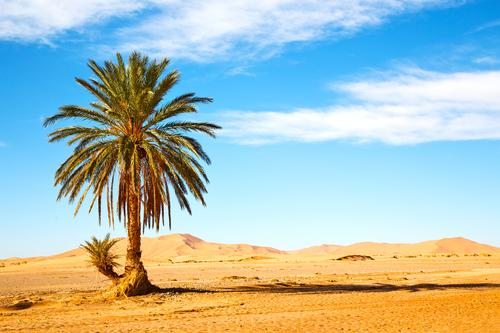 palm in the desert oasi Nature Vacation & Travel Plant Beautiful Summer Tree Loneliness Leaf Environment Natural Garden Stone Sand Rock Wild Tourism