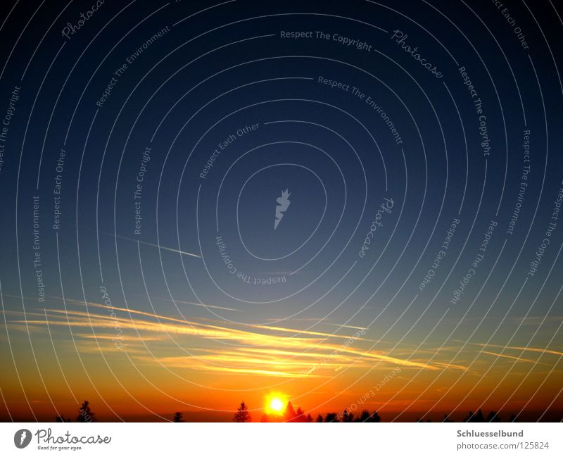 setting sun Sun Sky Tree Forest Blue Yellow Black Sunset Vapor trail Treetop Celestial bodies and the universe Orange Circle Sunlight Deserted Colour photo