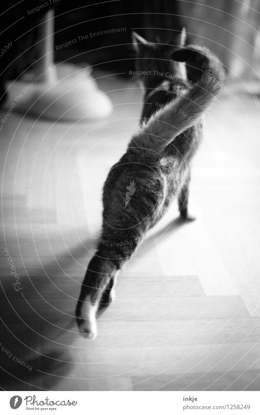 short morning gymnastics in passing Lifestyle Leisure and hobbies Living or residing Flat (apartment) Pet Cat 1 Animal Going Emotions Contentment
