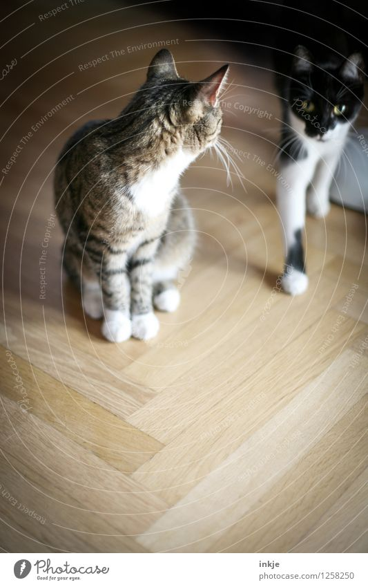 Thelma and Louise Lifestyle Living or residing Flat (apartment) Herringbone Parquet floor Pet Cat 2 Animal Pair of animals Crouch Looking Emotions Agreed Loyal